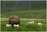 sheepHay.jpg