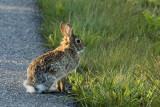 358-21 Bunny