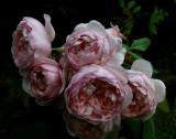 From a friend's garden, a very beautiful rose !