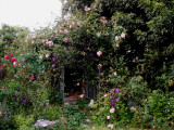 Randy's Memorial Garden