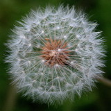 Flower Seeds  :-)