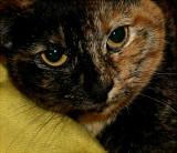 Wild Thang on her sleeping bag...