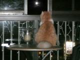 Full moon tonight!