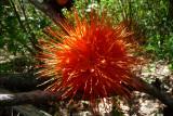 Wild flower????