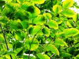 Just leaves...