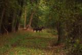 Cow Pastures, Thrapston, Northampton.