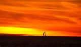 upload  sailboat sunset_MG_4462.jpg