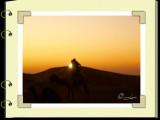 A Desert Safari