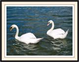 SwansHydePark
