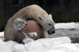 Snow Day at Bronx Zoo