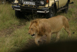 why you need a w-a lens on safari.jpg