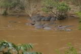 Hippo pod in the Mara River .jpg