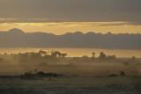 Dusty Dusk in the Masai Mara .jpg