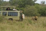 Close Encounter with a Black Mane Lion.jpg
