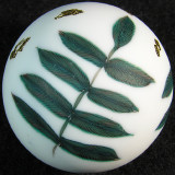 Gold Snow on Ferns Size: 1.31 Price: SOLD