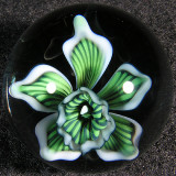 Green Orchid Dream Size: 1.16 Price: SOLD