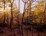 2007_autumn