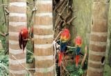02_parrots-1.JPG