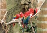 03_parrots_2.JPG