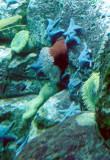 11_blue-starfish.JPG
