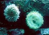 12_sea_life.JPG