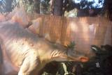 007_stegosaur1.JPG