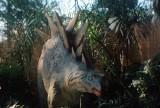 010_stegosaur2.JPG