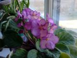 1080010_flowers_at_window2.JPG