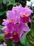 orchidshow0046.JPG