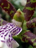 orchidshow0052.JPG