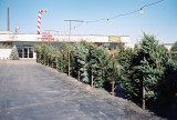 06_high_ridge_tree_lot.JPG