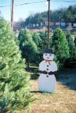 08_byrnesmill_tree_lot.JPG