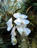 03_flower_a.jpg