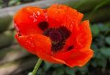 Joyce's Garden 051810