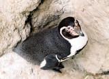 01_cornered_penguin.jpg