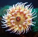 19_anemone_1.jpg