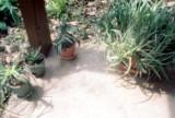 023_porch_plants1.JPG