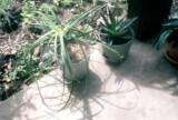 024_porch_plants2.JPG