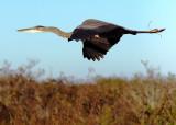 2010 Everglades National Park - Florida