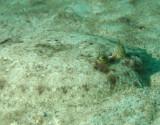 Flounders & soles