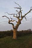 Dead Tree_2166.jpg