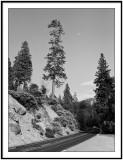 Moon Road in Sequoia