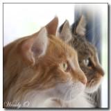 Angus & Beulah