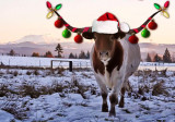 christmaslonghorn.jpg