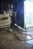 4-H Cow Barn damage
