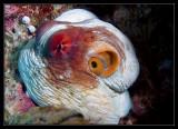 PNG Octopus