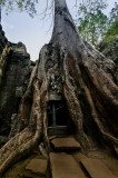 Ta Phrom, of course