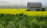jaune et vert IMG_6361-800.jpg