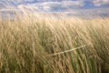 Connemara grass