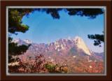 Ridge Trail View